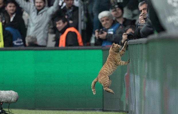 Maca mund t'ia sjell Besiktasit dënimin