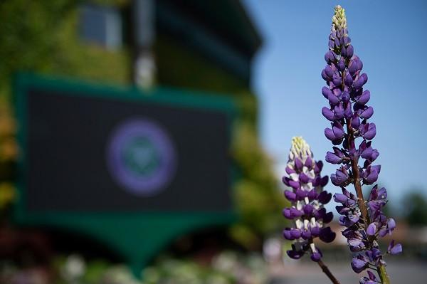 Për herë të parë nga LIIB, s'do të ketë Wimbledon